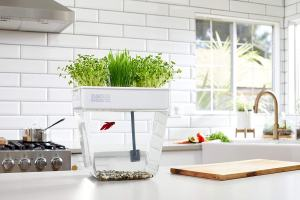 Herb sustainable Aquaponic Herb Garden